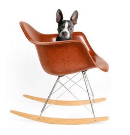 Modernica Rocker with dog